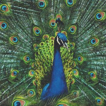 Proud As A Peacock Digital Spectrum Print By Hoffman SQ4512 Colour 136 Peacock