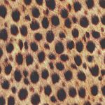Animal Kingdom by Robert Kaufman Fabrics SRKD-19871-286 Wild Cheetah.