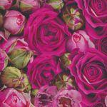 Budding Romance by Northcott Studio Mixed Roses DP23844 col 28 Dark Pink Multi.