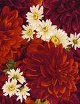 Dahlia by Chong-A Hwang for Timeless Treasures  4483 colour Dahlia