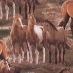 "David Textiles ""Wild Wings"" Horse Fabric"