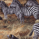 David Textiles for Four Seasons Zebras S032 col 457