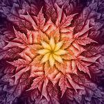 """Dream Big Leaf Digital Panel By Hoffman Fabrics R4617 428 Mulberry Size 44"""" X 44"""