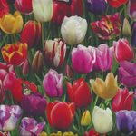 Elizabeth's Studio Digital Garden Tulips Allover D535 Multi