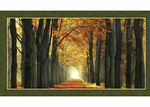 "Galaxy Of Graphics Autumn Scene Digital Panel Quilting Treasures 24634-X 25"" x 4"