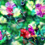 "Hummingbird 108"" Wide Backing 100% Cotton Hoffman Digital Spectrum Print HWR4583"