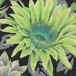 Kaffe Fasset Collective by Phillip Jacobs 2021 PWPJ096 Cactus Flower Contrast Gr