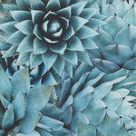 Natures Narratives Hoffman Spectrum Digital Print R4677 Color 653 Agave