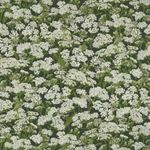 Naturescapes by Deborah Edwards for Northcott Fabrics Style 21845 Color 10