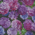 One Of A Kind Hydrangea Digital by Whistler Studios for Windham Fabrics 50907X