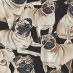 Pugs Pure Breed  From Timeless Treasures TTC2488 Pug.