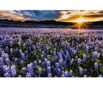 """Sun Up To Sun Down Hoffman Digital Panel 29""""x42"""" HR4690 647 Blue Bonnet."""